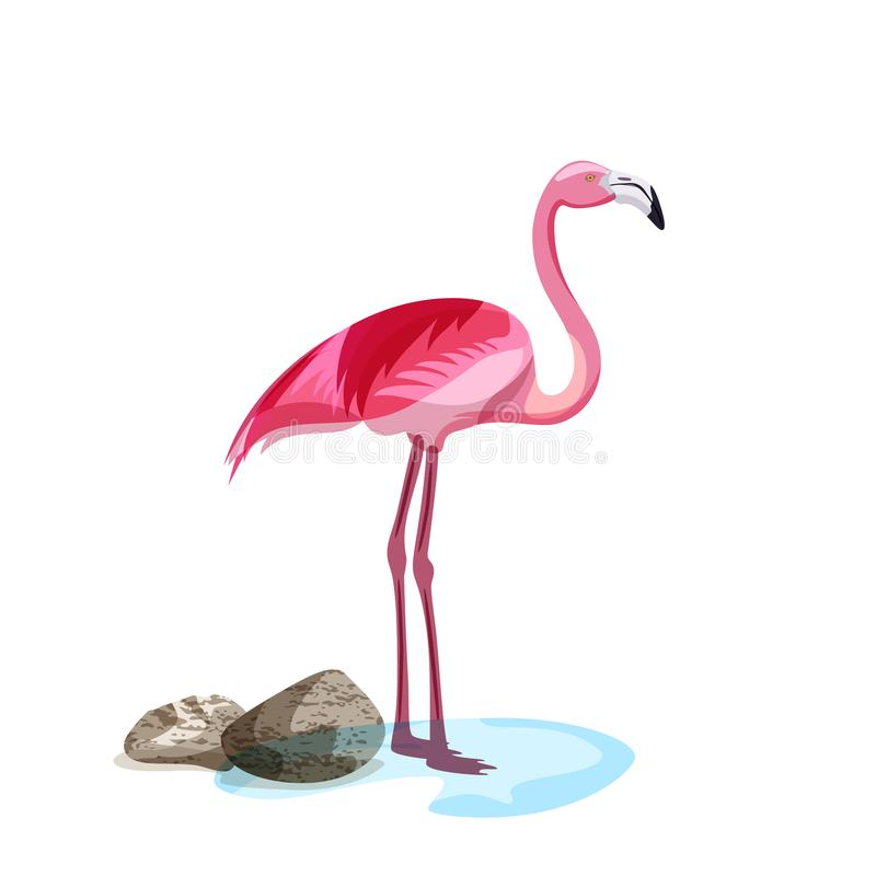 Tropical pink flamingo bird stands in water. Vector hand drawn illustration isolated on white background vector illustration