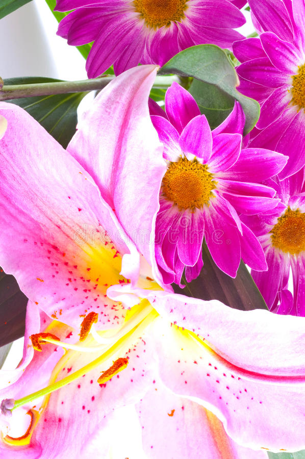 Tropical Pink Lily Stock Photos