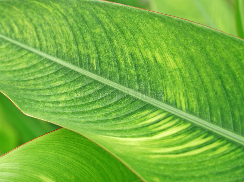 Tropical plant royalty free stock images