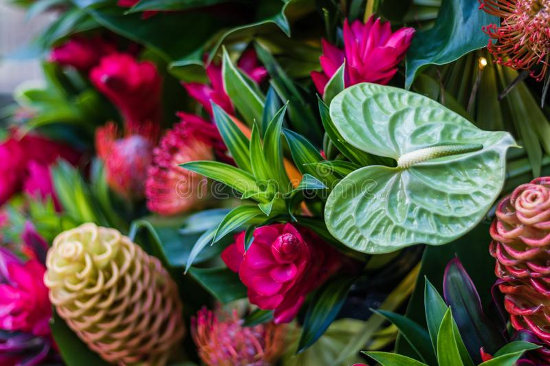 Tropical plant arrangement in beautiful fun vivid complimentary colors. Bright vivid background royalty free stock image