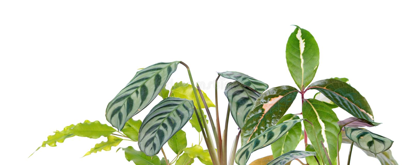Tropical plant border with different exotic plants isolated on white background royalty free stock images