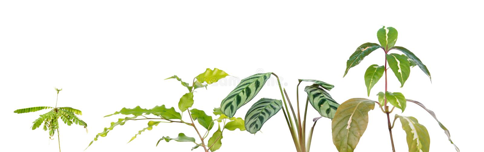 Tropical plant border with different exotic plants isolated on white background royalty free stock photos