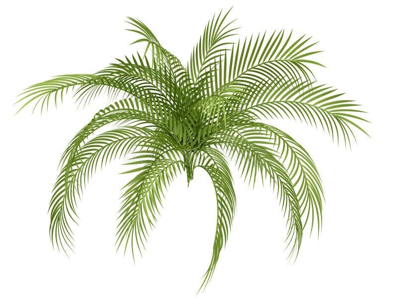 Tropical plant vector illustration