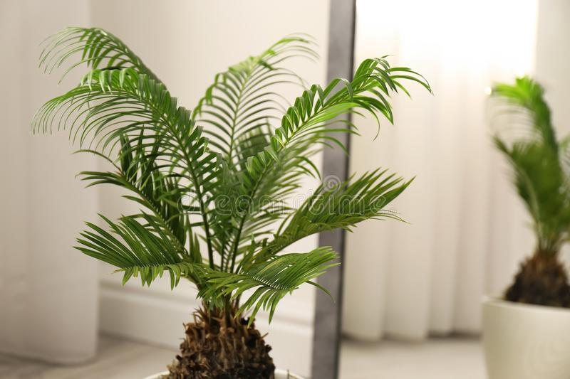Tropical plant with green leaves near mirror stock image