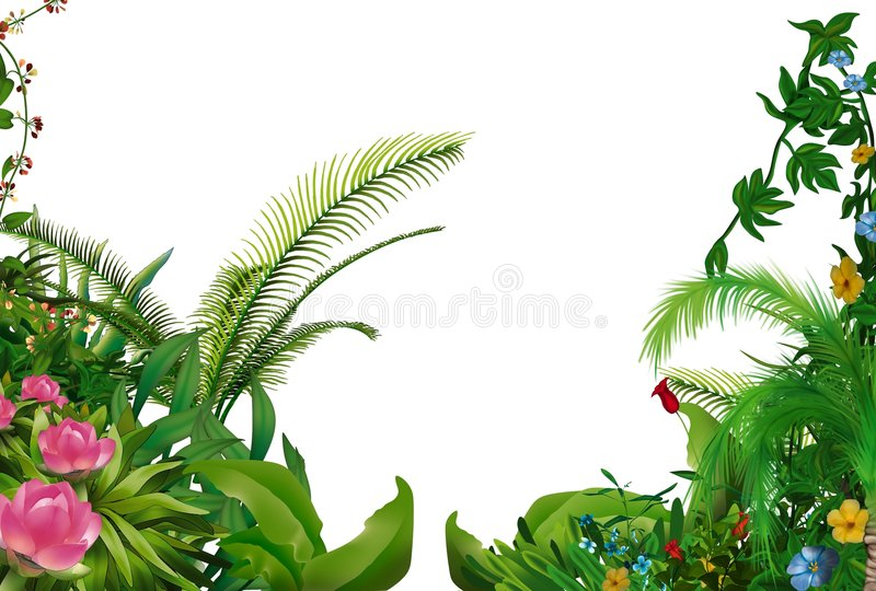Tropical Plants Stock Illustration Illustration Of