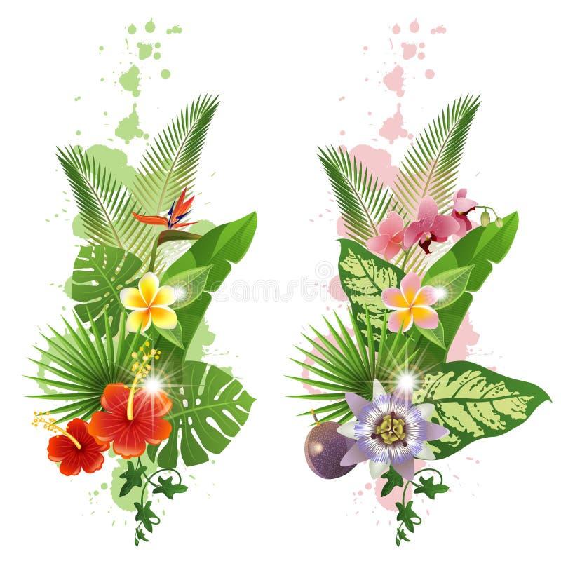 Tropical plants vector illustration