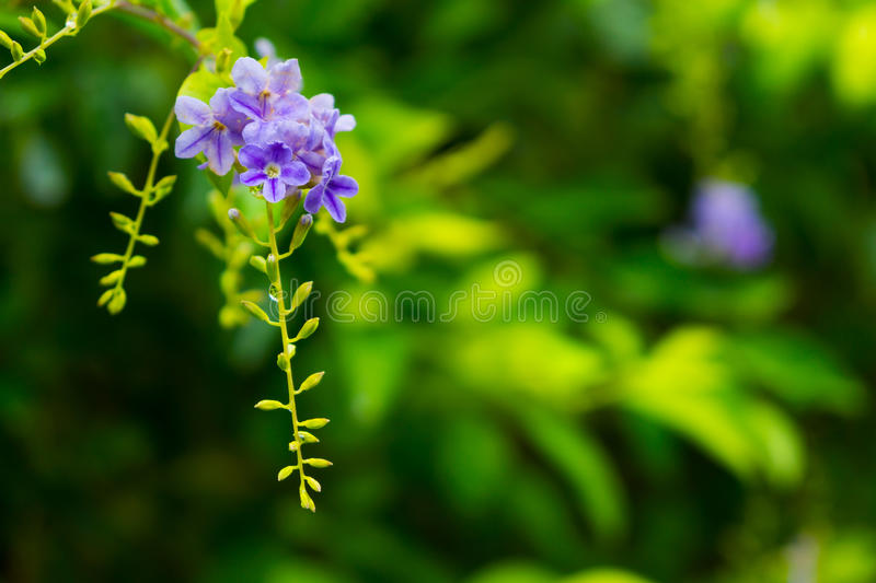 Tropical Plants And Flowers Background Stock Photo