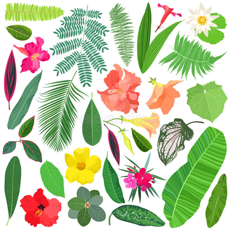 Tropical plants and flowers vector illustration
