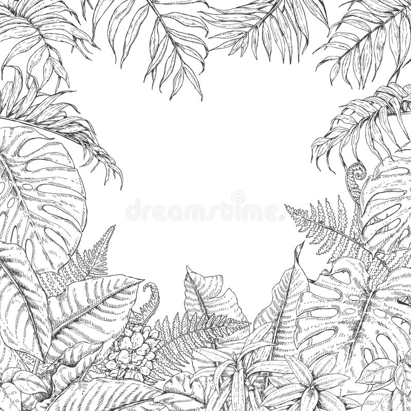 Tropical Plants Frame stock illustration