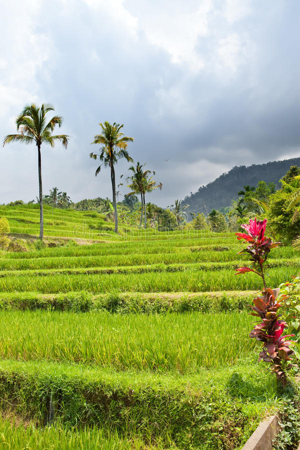 Download Tropical Plants On A Hill Slope, Indonesia. Stock Image - Image: 22866453