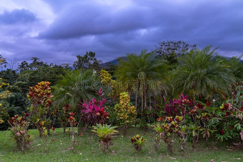 Tropical plants and palms at Costa Rican resort. At twilight with volcano mountain in the distance stock image