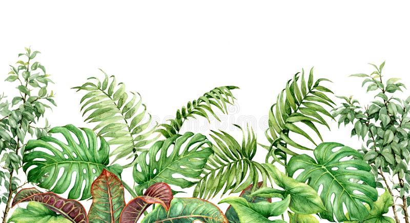 Tropical Plants Seamless Border stock illustration