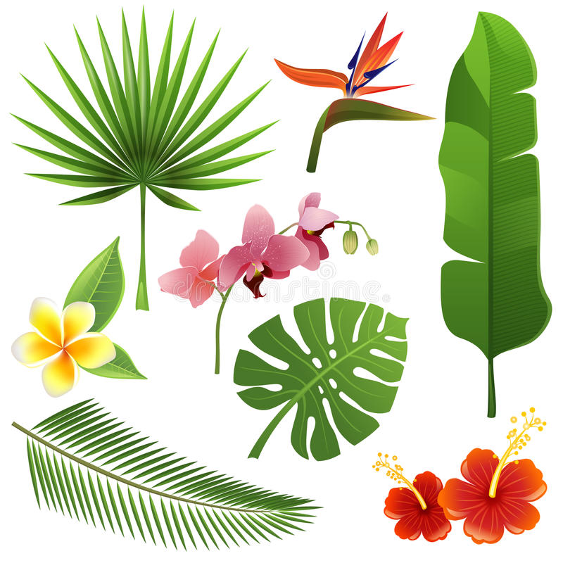 Tropical plants vector illustration