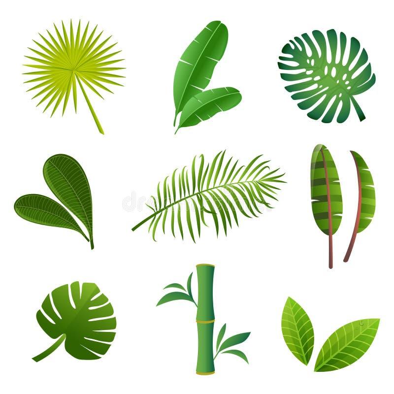 Tropical plants set. Vector illustration of green leaves.  stock illustration