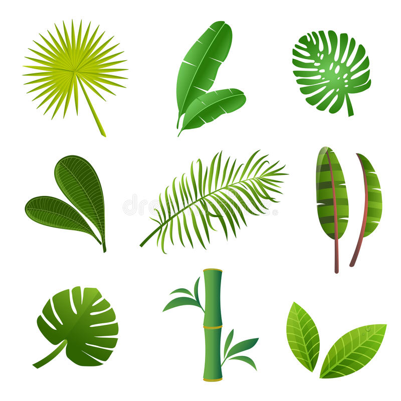 Tropical plants set. Vector illustration of green leaves. Tropical plants set. Vector illustration of green leaves stock illustration