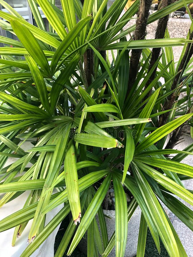 Tropical plants in Southeast Asia in Thailand.  royalty free stock photo