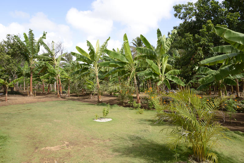 Tropical plants and vegetation in dominican republic stock photos