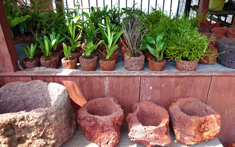 Tropical Plants In Volcanic Rock Pots Editorial Stock Image