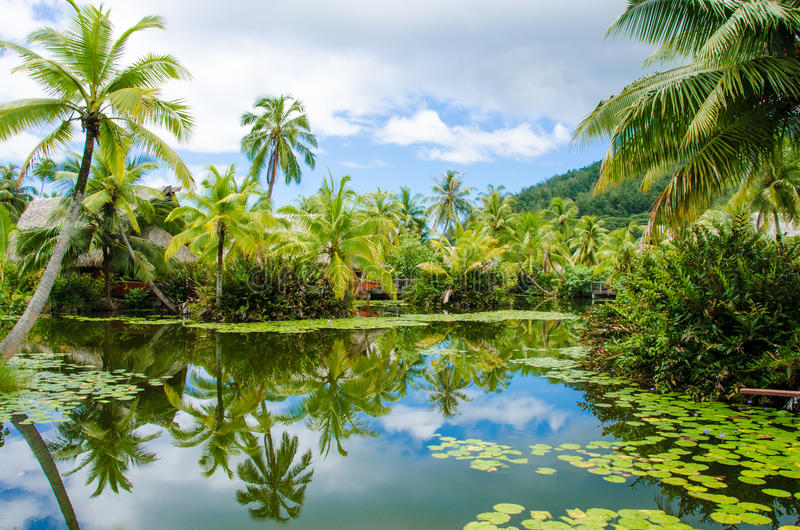 Tropical pond and palm trees stock images