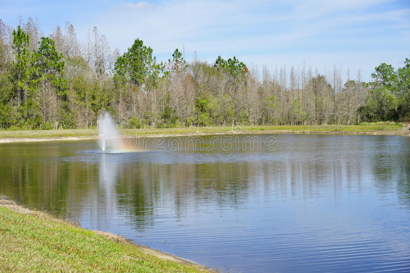 Tropical pond. Taken in Tampa, florida stock photography