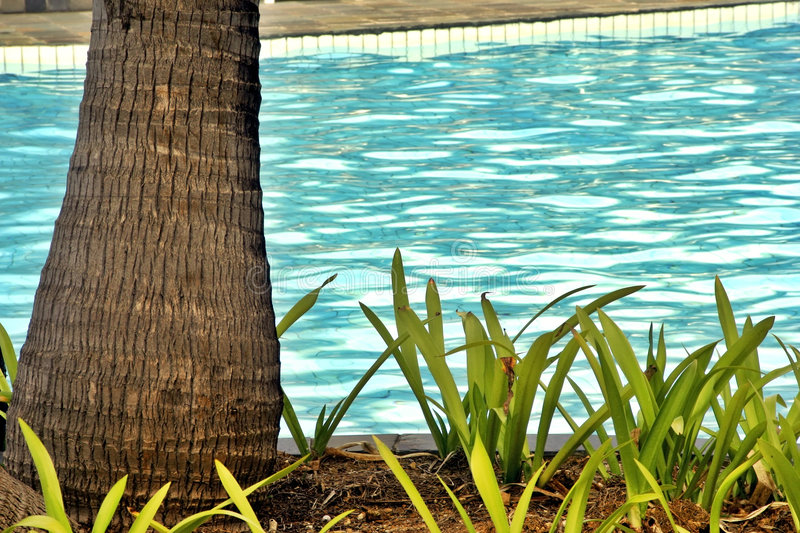 Tropical Pool royalty free stock photo