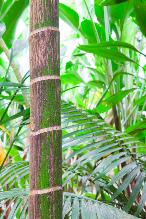 Tropical pristine rain forest background stock image