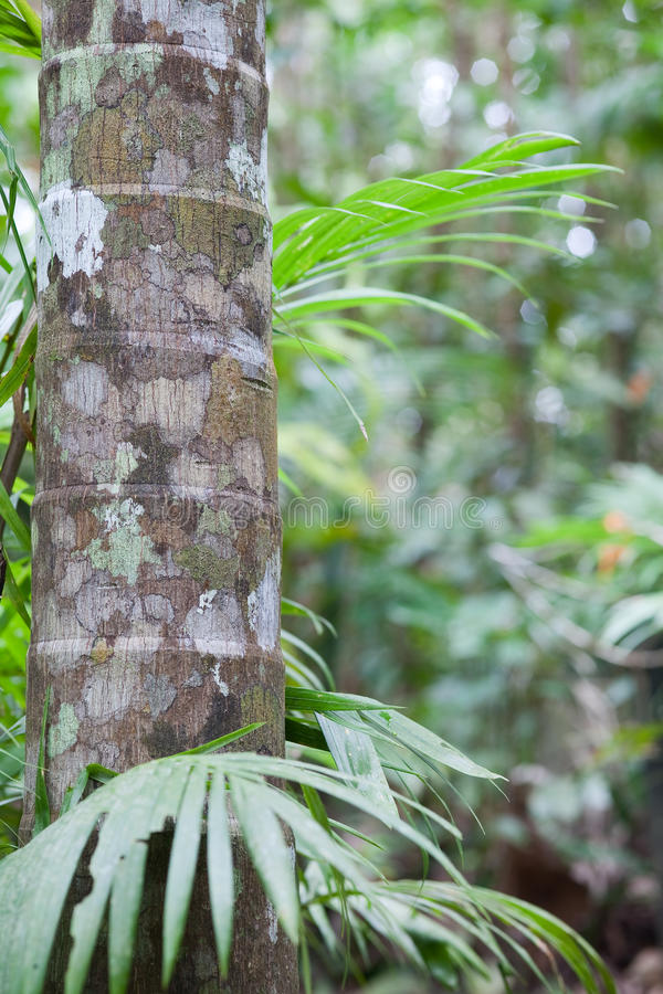 Tropical pristine rain forest background royalty free stock photo