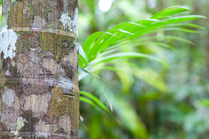Tropical pristine rain forest green background royalty free stock image