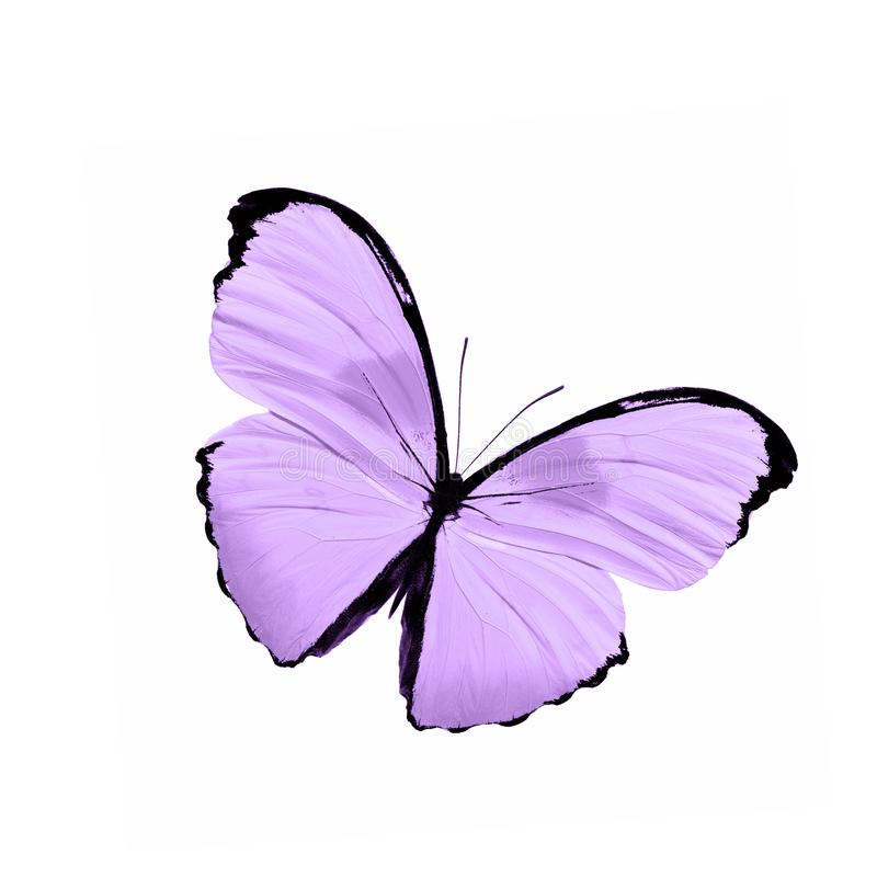 Tropical Purple Butterfly Isolated On White Background Stock Illustration Illustration Of Collection Beauty 137658911
