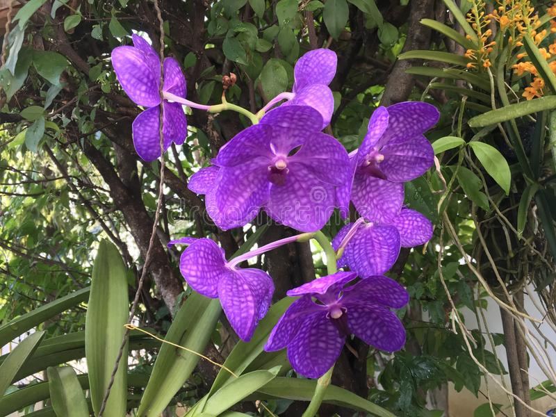 Tropical purple orchid stock photo