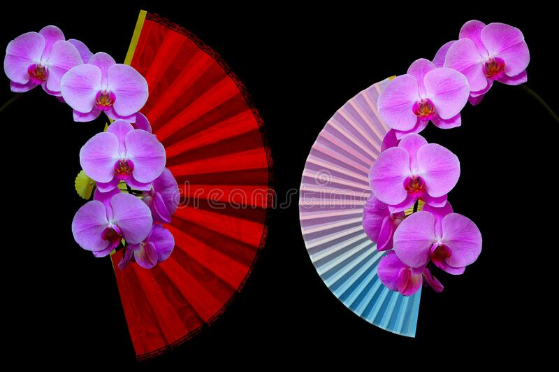 Decorative folding fans and beautiful pink phalaenopsis orchids on dark background royalty free stock photography