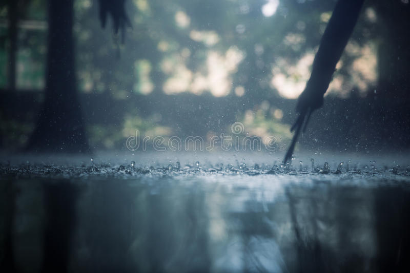 Tropical rain royalty free stock image