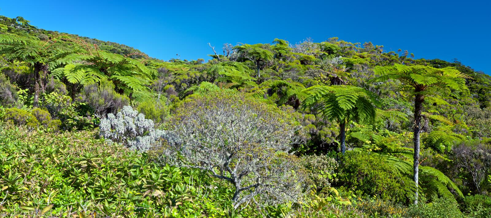 Download Tropical Rain Forest Stock Photography - Image: 19949062
