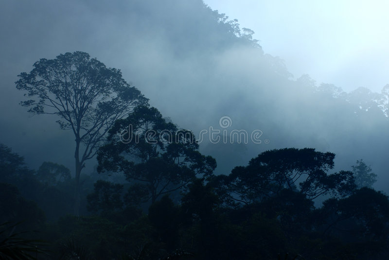 Tropical Rain Forest Royalty Free Stock Images