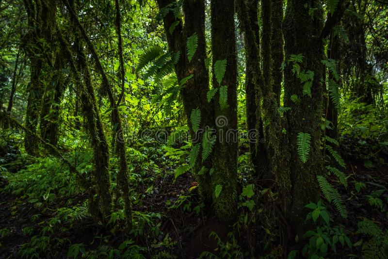 Tropical rain forest royalty free stock photo