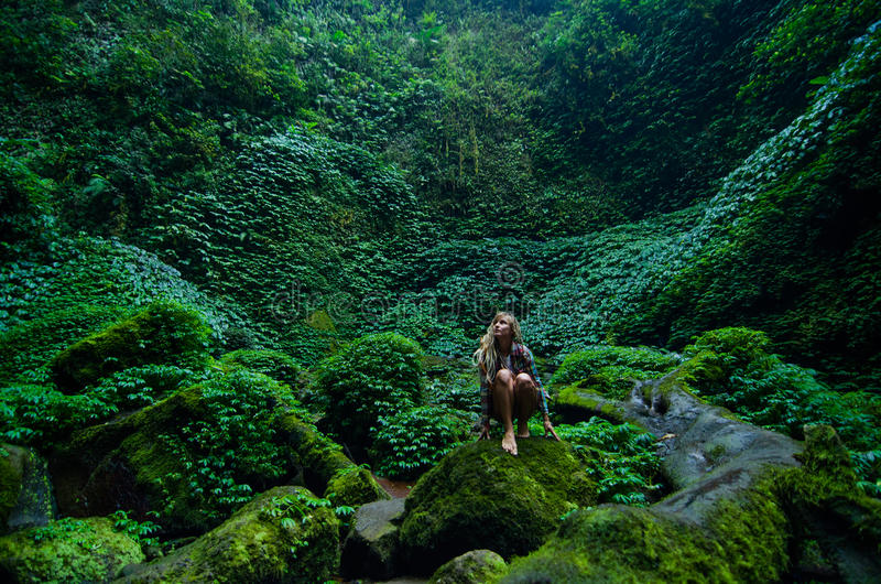 Tropical rain forest stock image