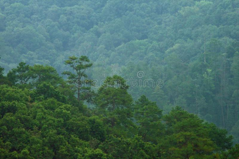 Tropical Rain Forest Mountains Landscape Trees Green Background stock photos