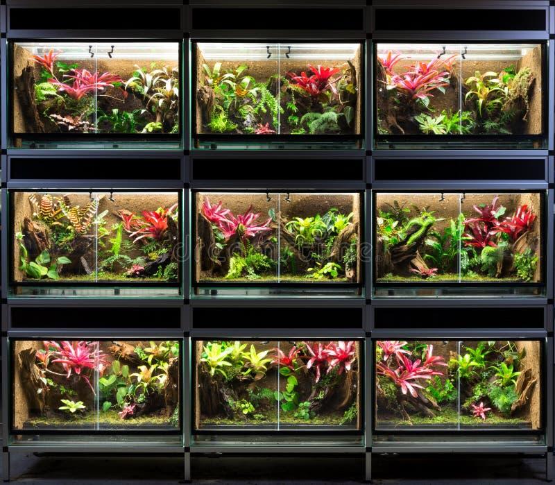 Tropical rain forest terrarium or pet vivarium rack stock photos