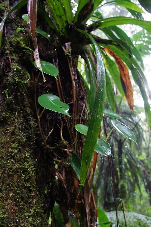 Tropical rain stock photography