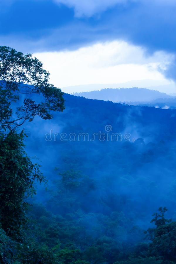 Tropical rainforest in the morning misty stock images