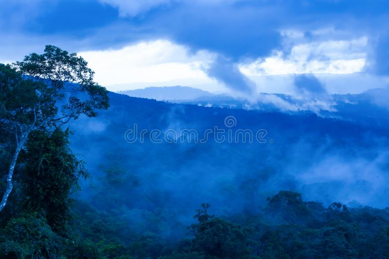 Tropical rainforest in the morning misty royalty free stock image