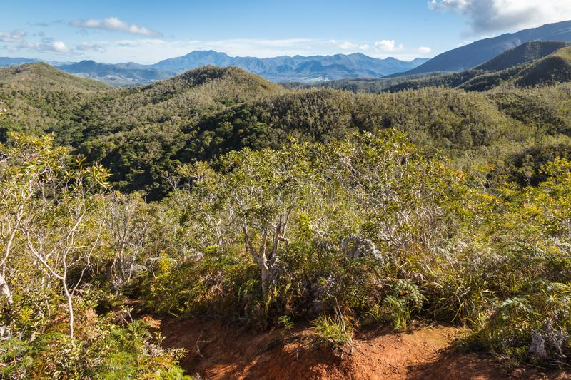 Tropical rainforest on mountain ranges in Grande Terre, New Caledonia. With blue sky and copy space royalty free stock images