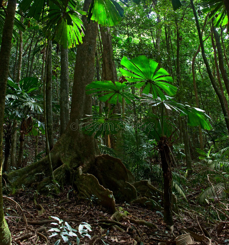 Tropical rainforest national park Australia stock photography