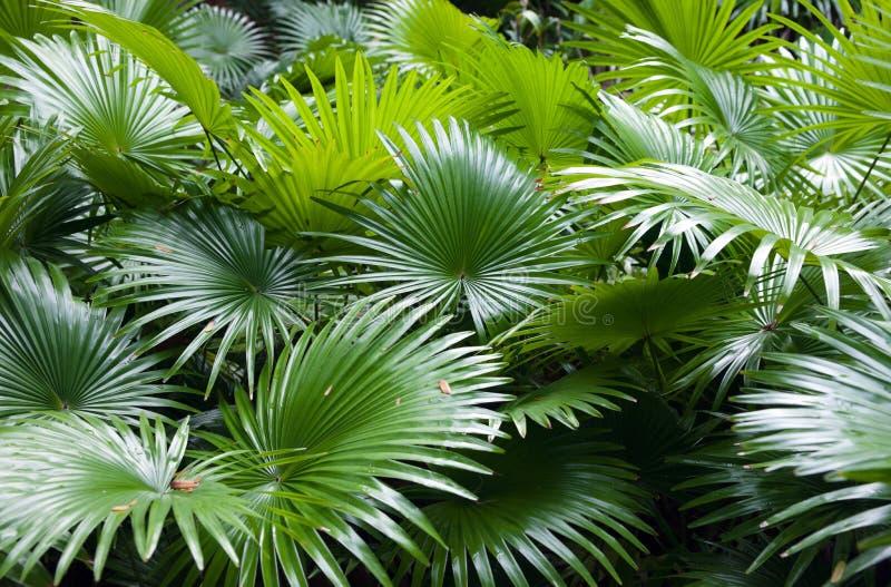 Tropical rainforest palm background stock photos