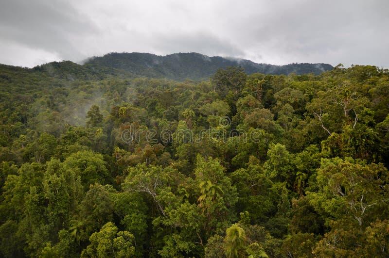 Tropical Rainforest in Queensland