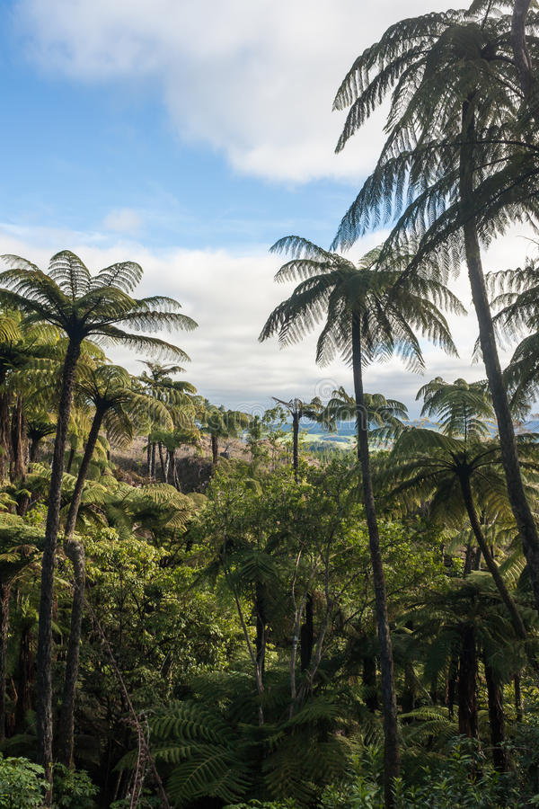 Tropical rainforest with tree ferns stock images