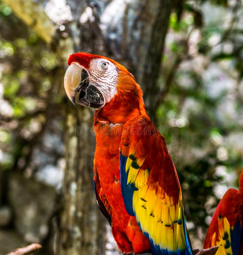 Tropical Red Parrots stock photos