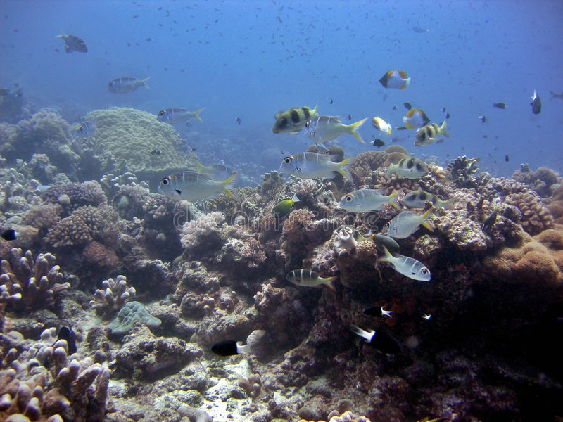 Tropical Reef stock image
