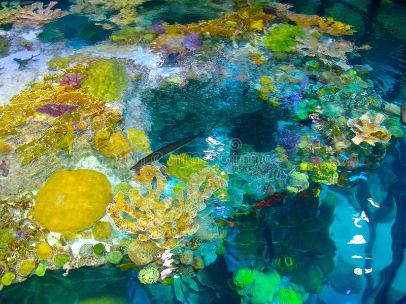 Tropical Reef royalty free stock photo