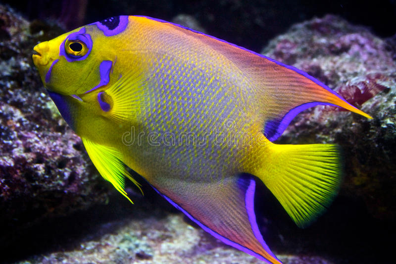Tropical Reef Fish stock photos